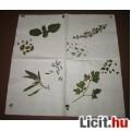 Eladó fűszernövények  dekorszalvéta
