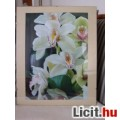 Eladó orchideák (fotó,üveg alatt)