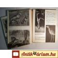 Az Állatok Nagy Képeskönyve (Koroknay István) 1988 (szétesik !!)