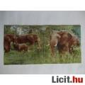 szalvéta - elefántok