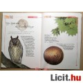 Witch Kisokos Tini Bosziknak 2 (2006) 4kép+Tartalom :)