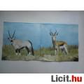 Eladó szalvéta - antilop