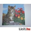 Eladó szalvéta - cica